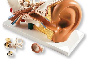Ozonoterapia en Otorrinolaringologia